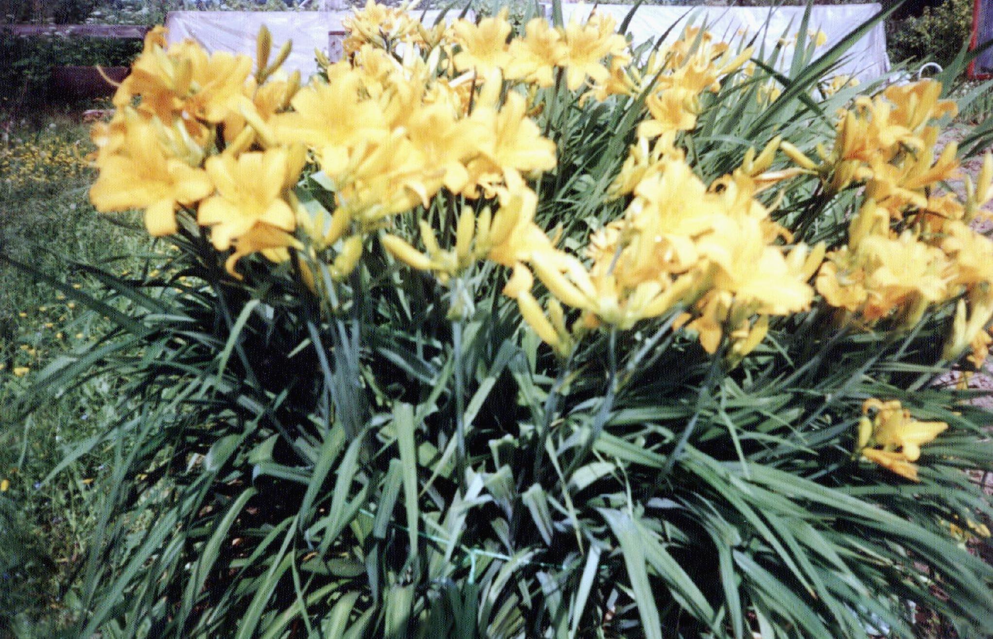 Садовые цветы | Фото, названия садовых цветов | 1316x2043
